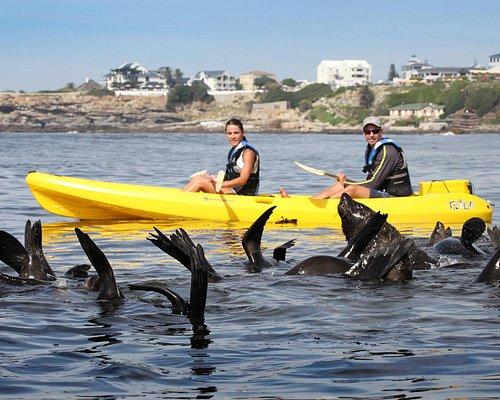 Cape Fur Seals come to greet us
