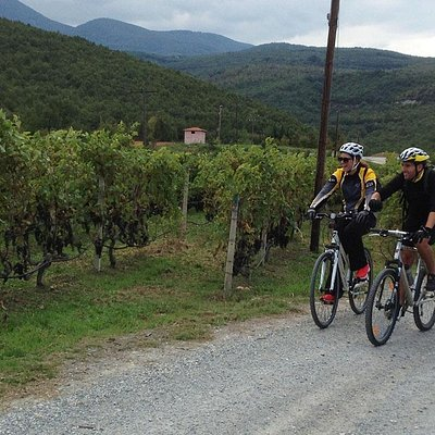 Cycling through vineyards - Naoussa'Thessaloniki Tour