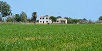 Parque Natural del Delta del Ebro Parque Natural del Delta del Ebro