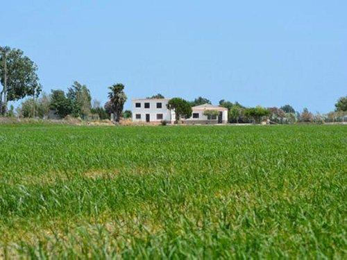 Campos de arroz en el Parque Natural del Delta del Ebro en el mes de junio.