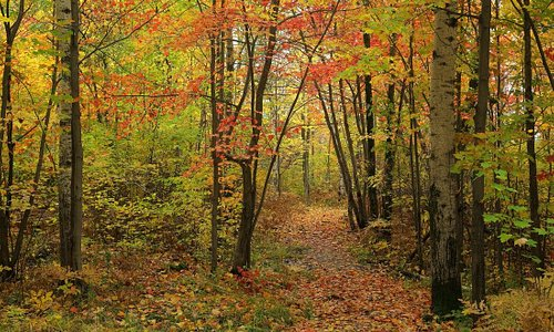 Autumn colours along main trail of Laurier Woods CA