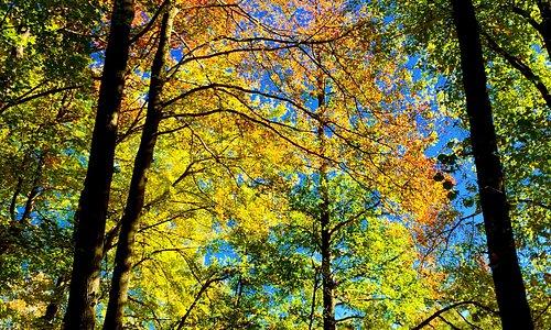 Autumn at CSP