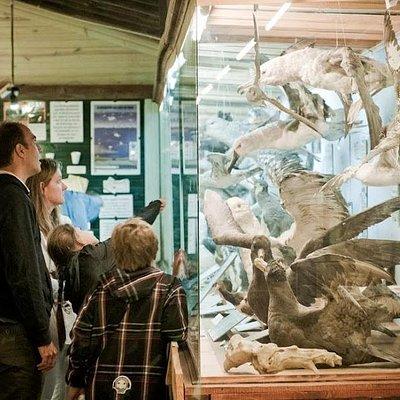 MUSEO DEL MAR, Aves Marinas