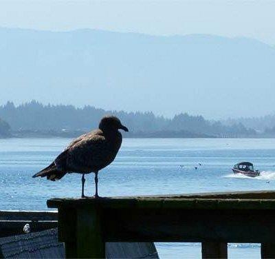 Gull on the pier
