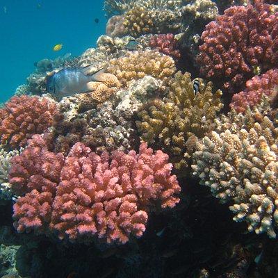 coralli a Soma bay
