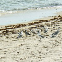 Aves marinhas dividem a praia com os banhistas