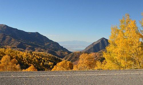 Gorgeous fall colours