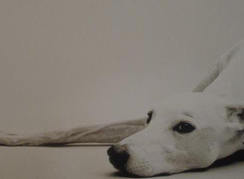 Pete Dines Greyhound
