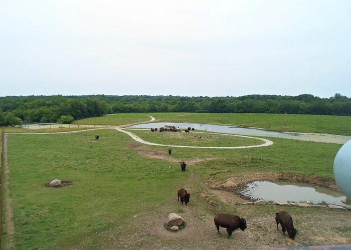 Buffalo Pasture
