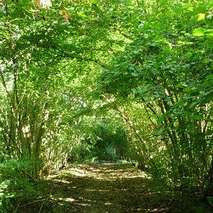Reseve Naturelle de l'Ile du Rohrschollen