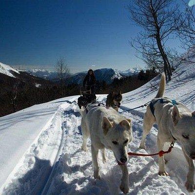 Escursione in slitta