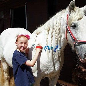 Pony Days grooming