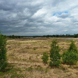 Heideveld op een korte route,  vanaf de jachthut aan de kant van Arcen.