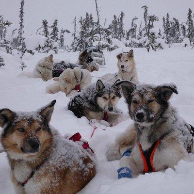 The Denali Adventures Team