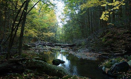 The brook at twilight