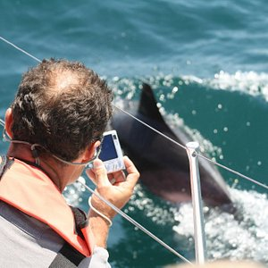 Common dolphins often love bow riding our sailing boat