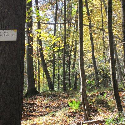 Start of Woodland Trail
