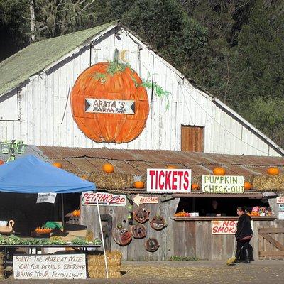Arata Pumpkin Farm, Half Moon Bay, Ca