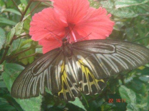 Butterflies..