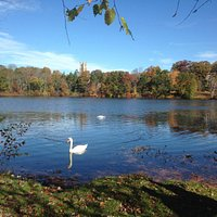 More swan pictures with Wellesley Colleg