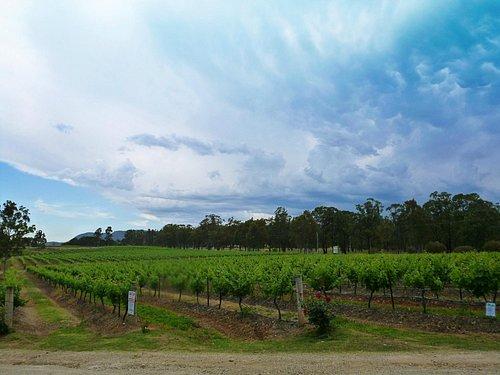Lovely Vineyard