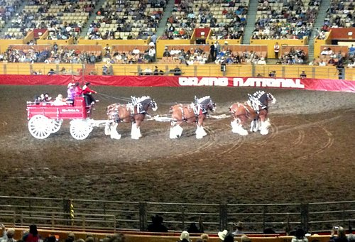 Cow Palace - October 2014 Grand National Rodeo - Daly City, CA