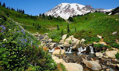 Edith Creek at Paradise