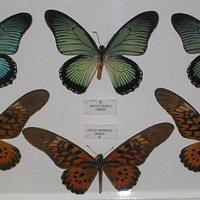 Museo de Mariposas