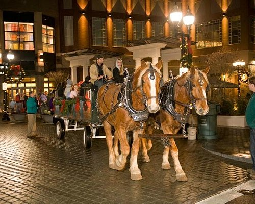 Blue Back Square Carriage Ride