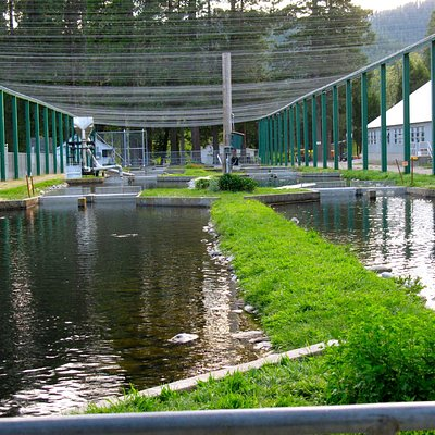 The fish hatchery sits on a beautiful piece or property with a park and a museum.