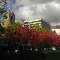 Kion Building with the colors of autumn.