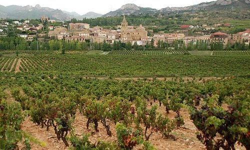 Their vineyard - what a backdrop!