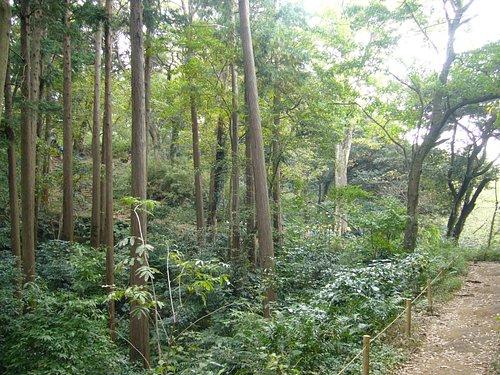 緑の中のハイキングコース