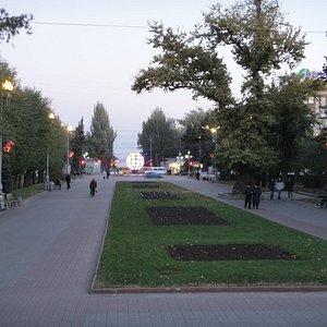 Тополь на Площади Павших Борцов. Волгоград
