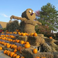 The scarecrow and pumpkins