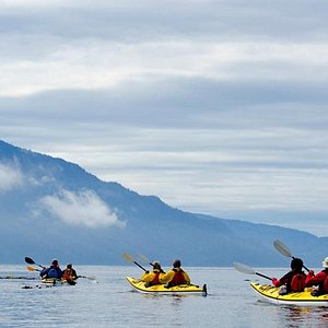 Ecosummer's Orca Camp is beside the Robson Bight Ecological Preserve the best places to see Orca