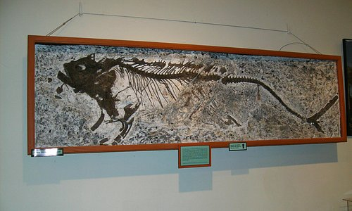 Fish fossil with last meal inside