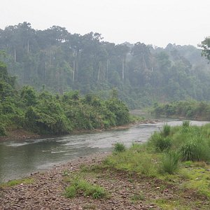 River flowing through the Dehing Patkai wildlife sanctuary