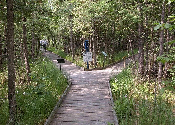 Boardwalk to view orchids