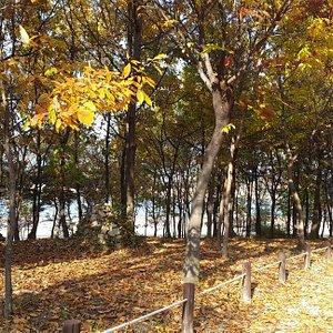 Hanbat arboretum during autumn