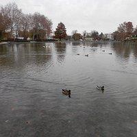 50-Acre Lake