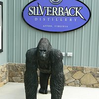 """""""Silverback"""" awaits your arrival!"""