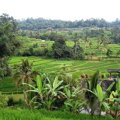 Sistim irigasi Bali atau Subak di Desa Jatiluwih, Tabanan
