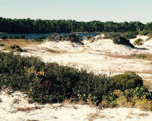 Sand dunes undisturbed. Peace & quiet
