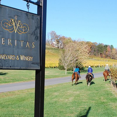 Veritas Vineyard horseback riding...Ashton took great pics!