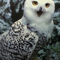 This Snowy Owl (one of my favorites) will great you in the natural history exhibit upstairs.