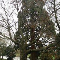 Caversham Court Gardens