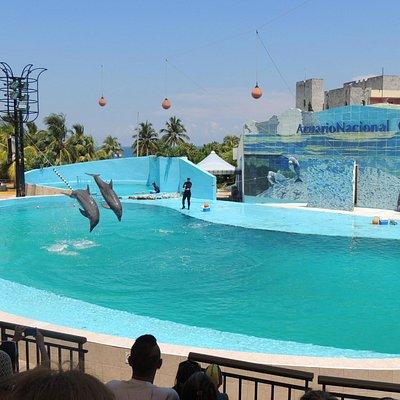 Apresentação de golfinhos