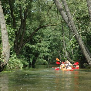 Kayaking on Wieprz river