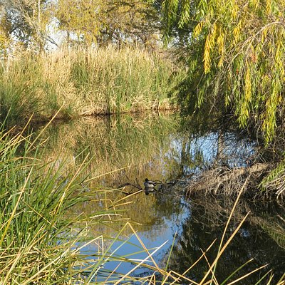Pond at Sweetwater Wetlands